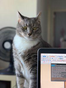 gato por trás de um computador
